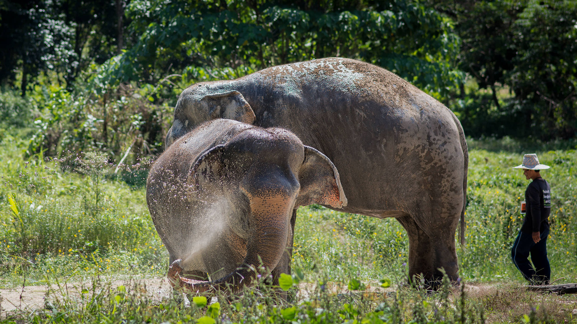 PHUKET'S <br> FIRST ETHICAL <br> ELEPHANT SANCTUARY
